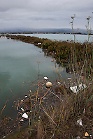A soccer ball floats with styrofoam cups, candy wrappers and other trash in the Doolittle Pond Wildlife Sanctuary at San Leandro Bay near the Oakland International Airport on Thanksgiving morning, 2011.