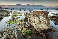 Dusk on rocky shores of Kaikoura coastline with Kaikouras mountains in background and seaweed, Marlborough Region, South Island, East Coast, New Zealand