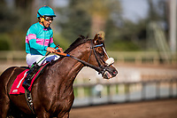 ARCADIA, CA - MAY 27: Son of Zenyatta, Ziconic and Victor Espinoza race at Santa Anita Park  on May 27, 2017 in Arcadia, California. (Photo by Alex Evers/Eclipse Sportswire/Getty Images)