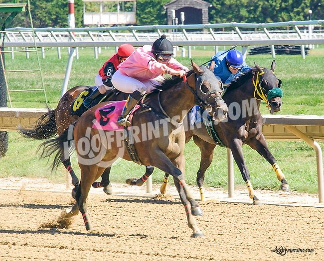 Cadillac Rose winning at Delaware Park on 9/23/15
