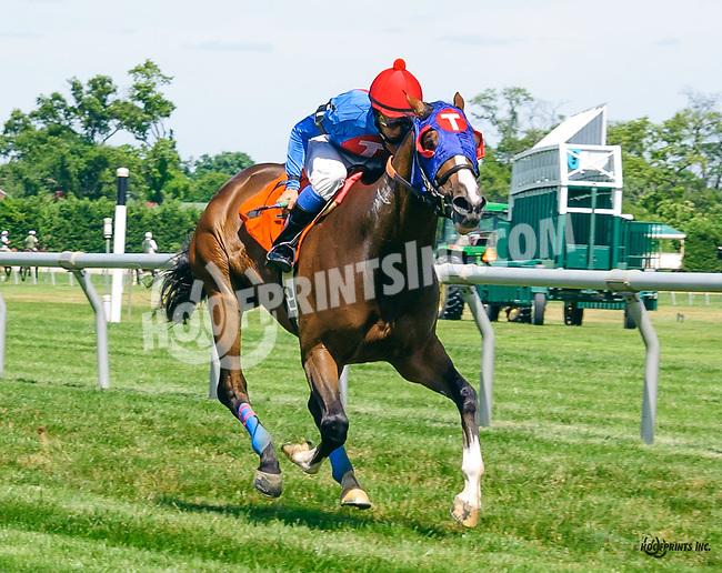 Summer Solution winning at Delaware Park on 7/2/16