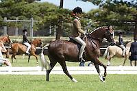 Champion Child's Small Pony