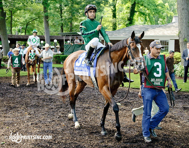 Montana Native before The Obeah Stakes (gr 3) at Delaware Park racetrack on 6/14/14