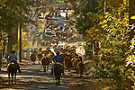 Greeley Hill, California October 23, 2007..Cattle Drive from Kasabaum Meadow through Hell's Hollow to Boneyard coral on Priest Coulterville Road. Erickson Cattle Company..Photo by AL GOLUB/Golub Photography.