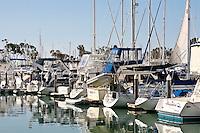 Boats In Dana Point Harbor