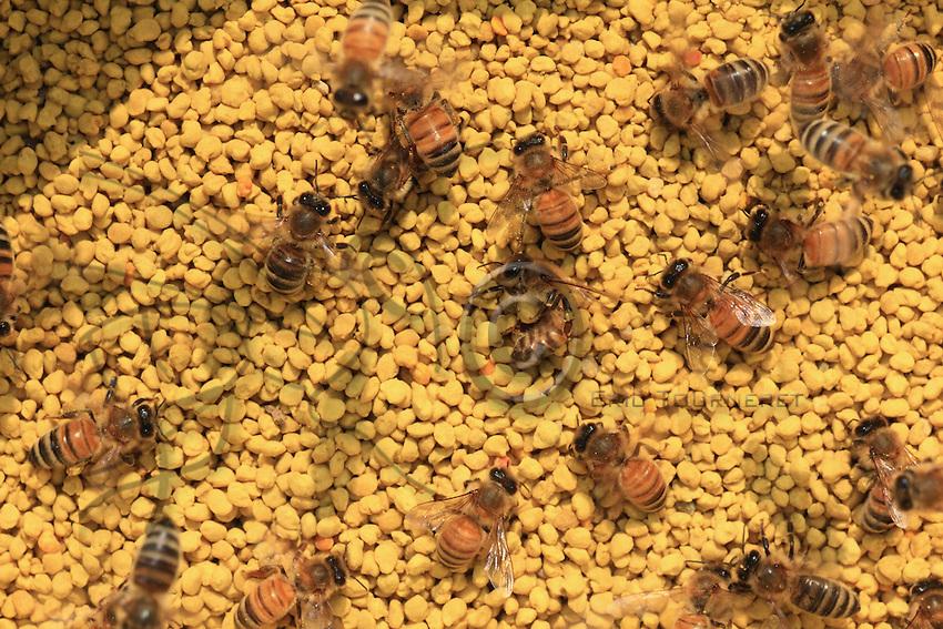 Honeybees on polllen