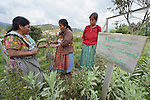 Hilda Coronado (left) trains agricultural promoters at an eco-agricultural training center in Comitancillo, Guatemala. The center is sponsored by the Maya Mam Association for Investigation and Development (AMMID).
