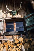 Europe/France/Rhône-Alpes/74/Haute-Savoie/Megève: Au domaine de la Sasse chez Dominique Méridol éleveur de bisons