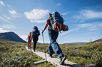 Group of hikers walk on wooden planks under blue sky, near Abiskojaure hut, Kungsleden trail, Lapland, Sweden