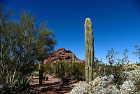 Desert Botanical Garden, Phoenix, AZ, 11/2014.