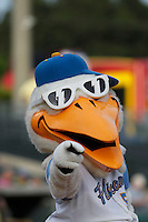 Myrtle Beach Pelicans mascot Splash Pelican (5) before a game against the Salem Red Sox at Ticketreturn.com Field at Pelicans Ballpark on May 5, 2015 in Myrtle Beach, South Carolina.  Myrtle Beach defeated Winston-Salem  6-0. (Robert Gurganus/Four Seam Images)