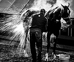 May 15, 2019 : Market King, trained by D. Wayne Lukas, gets a bath at the Stakes Barn as horses prepare for Preakness Week at Pimlico Race Course in Baltimore, Maryland. Scott Serio/Eclipse Sportswire/CSM