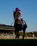 OCT 05: Van Beethoven with Wayne Lordan races in the Shadwell Turf Mile at Keeneland Racecourse, Kentucky on October 05, 2019. Evers/Eclipse Sportswire/CSM