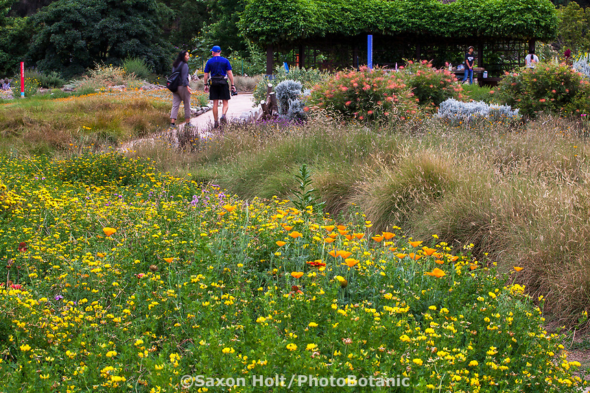 Visitors in flowering wildflower meadow Crescent Farm, sustainable demonstation garden; Los Angeles County Arboretum and Botanic Garden
