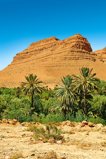 Palm trees growing in the river bed of the Ziz Gorge, Morocco