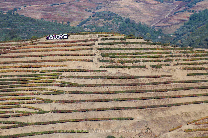 vineyards taylor's sign near vale de mendiz douro portugal