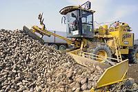 - automated harvesting of sugar beet in the province of Piacenza....- raccolta automatizzata delle barbabietole da zucchero  in provincia di Piacenza....
