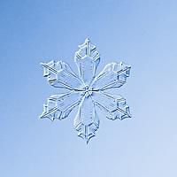 Snowflake Kyanite - Stellar Plate Snowflake