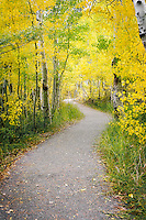 A tranquil trail off the beaten path of the June Lake Loop among aspen at full autumn peak