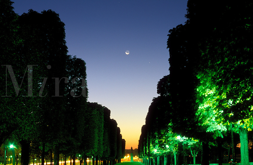 France, Paris, crescent moon rising over a grove of trees at dawn