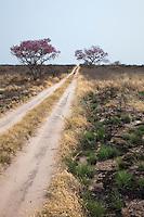 New growth along a kalahari track after a gentle bush fire