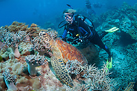green sea turtle, Chelonia mydas, and woman scuba diver, Milln Reef, Cairns, Great Barrier Reef, Queensland, Australia, Coral Sea, South Pacific Ocean, MR