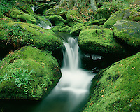 Moss-covered rocks along Roaring Fork; Great Smoky Mountains National Park, TN
