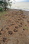 Footprints Along River, Great Zimbabwe Safari