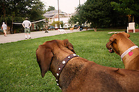 NEW ORLEANS - AUG 27: Dogs play at Cabrini Park on August 27, 2008 in New Orleans. (Photo by Landon Nordeman)