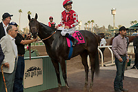 ARCADIA, CA  JANUARY 07:#8 Midnight Bisou, ridden by Mike Smith, in the winners circle after winning the Santa Ynez Stakes (Grade ll) on January 7, 2018, at Santa Anita Park in Arcadia, CA. (Photo by Casey Phillips/ Eclipse Sportswire/ Getty Images)