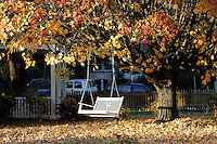 swing chair fall leaves porch tree
