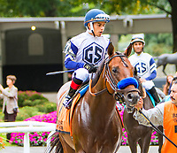 OCTOBER 7, 2018 :Stole E in the Futurity Stakes at Belmont Park on October 6, 2018 in Elmont, NY.  Sue Kawczynski/ESW/CSM