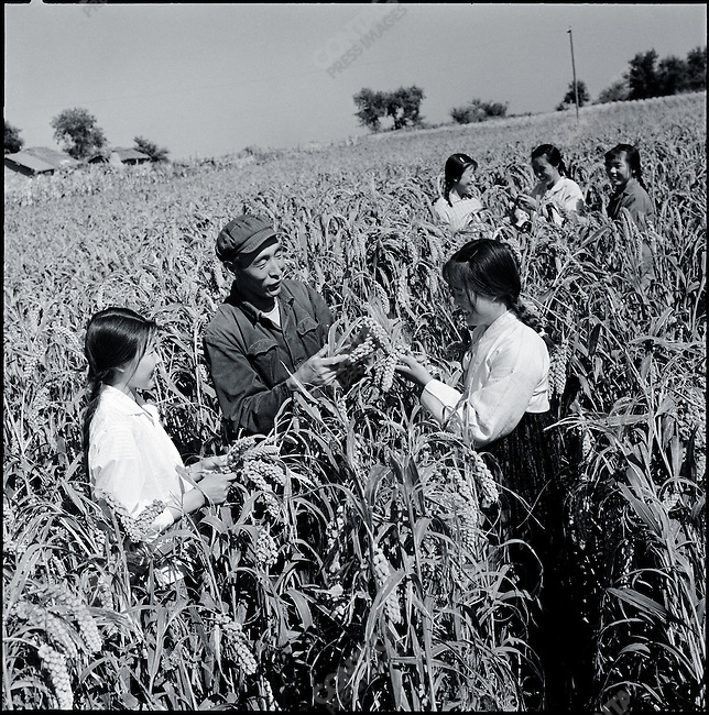 """Educated youth"" learn from peasants, Wuchang county, Heilongjiang province, July 15, 1971."