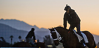 Scenes from morning workouts as horses prepare for the Breeders' Cup at Santa Anita Park in Arcadia, California on October 30, 2013.