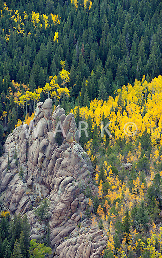 Fall colors, Pike National Forest, Colorado