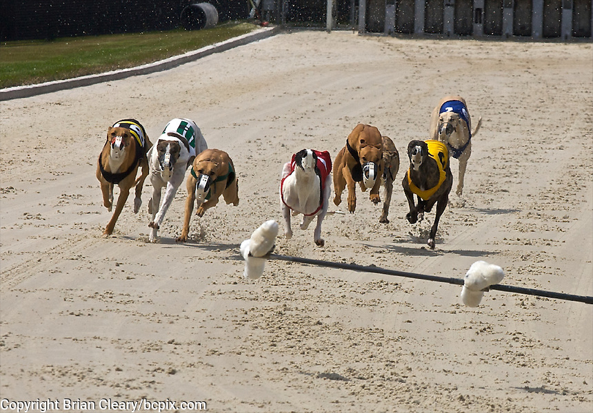 Daytona Dog Track >> Dog Racing Action Photos By Brian Cleary Www Bcpix Com