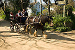 Horse drawn carriage ride along sandy village road, Island of Sark, Channel Islands, Great Britain