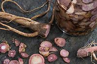 Gewöhnliche Nachtkerze, Tinktur, Tinkturen, alkoholischer Auszug aus Wurzel, Nachtkerzen-Tinktur, Wurzeln, Nachtkerze-Wurzel, Nachtkerze-Wurzeln, Nachtkerzen-Wurzel, Nachtkerzen-Wurzeln, Wurzelstock, Pfahlwurzel, Oenothera biennis, Common Evening Primrose, Evening-Primrose, Evening star, Sun drop, Root, roots, root-stock, taproot, Onagre, L'Onagre bisannuelle