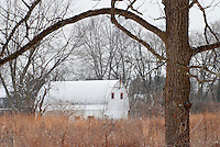 A white barn sits idol in winter, framed by neighboring trees in a woodlot, DuPage County, Illinois