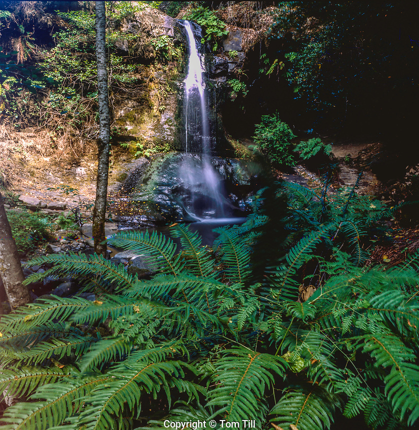 Waterfall along the river, Rogue River Wildrness, Oregon, Siskiyou National Forest, August