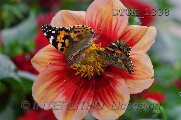 Gisela, FLOWERS, photos(DTGK1338,#F#) Blumen, flores, retrato