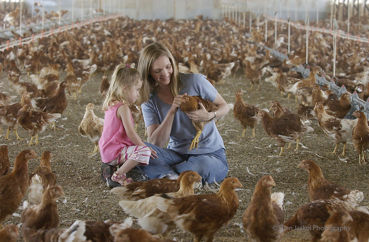 [Erie, Colo, July 17, 2003]-- Cyd Szymanski and her daughter AnnaBelle age 3 1/2 , visit some organic teenage chickens (12 weeks old)  in Erie.   Cyd is the owner of Colorado Natural Eggs, and Nest Fresh eggs is the brand name.  These Hyline chickens will lay brown eggs when they get a little older.   (Ellen Jaskol/ ROCKY MOUNTAIN NEWS)..