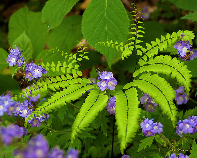 Wildflowers embraced by a fern in the Tremont area of the Great Smoky Mountains National Park.