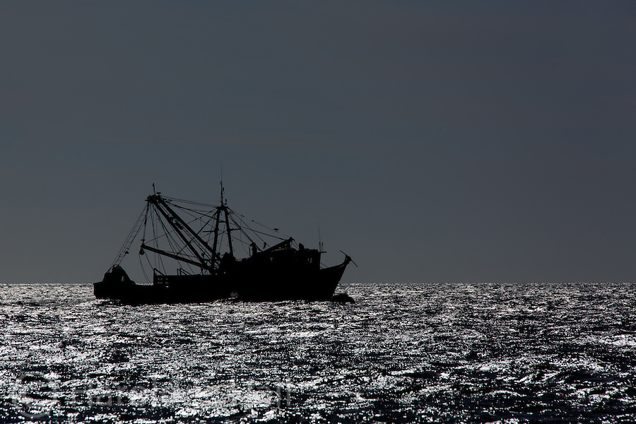 A shrimp trawlers cruises the rich waters in the sea of Cortez Mexico.