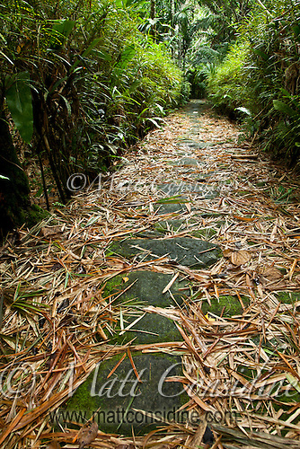 Ancient stone paths like this connect all the villages in Yap, Micronesia. (Photo by Matt Considine - Images of Asia Collection) (Matt Considine)