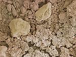 Soil - SEM X100