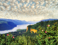 M00241M.tiff   Columbia River Gorge and Crown Point with roses. Columbia River Gorge National Scenic Area, Oregon