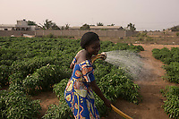 Togo - Agbavi - A villager water the field located close to the ocean. Most villagers cannot afford to buy the treatment to protect the plants from the high concentration of salinity, a result of the fact that the ocean is getting closer and closer to the fields.