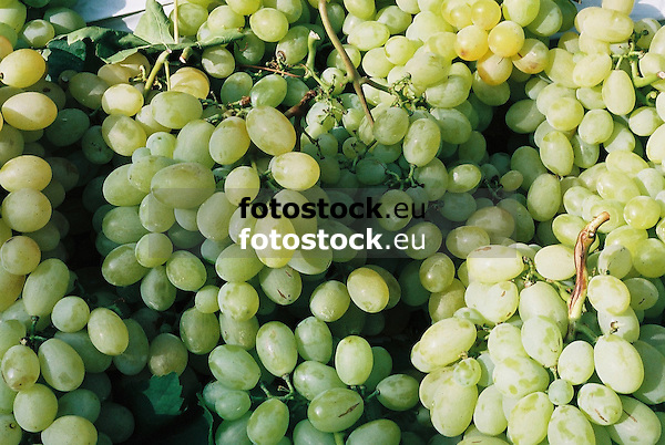 white wine grapes<br /> <br /> uvas de vino blanco<br /> <br /> Weißweintrauben<br /> <br /> 2688 x 1801 px<br /> 150 dpi: 45,52 x 30,50 cm<br /> 300 dpi: 22,76 x 15,25 cm<br /> Original: 35 mm