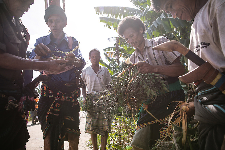 Betel nut picked for the ritual before the Pasola started in Bondo Kawango, Kodi. Pasola is an ancient tradition from the Indonesian island of Sumba. Categorized as both extreme traditional sport and ritual, Pasola is an annual mock horse warfare performed in response to the harvesting season. In the battelfield, the Pasola warriors use blunt spears as their weapon. However, fatal accident still do occurs.